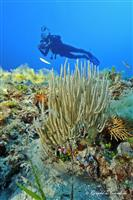 Croatia Diving: Diver on reef
