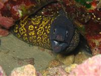 Croatia Diving: Moray eal