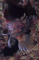 Croatia Diving: Fish looking at a divers
